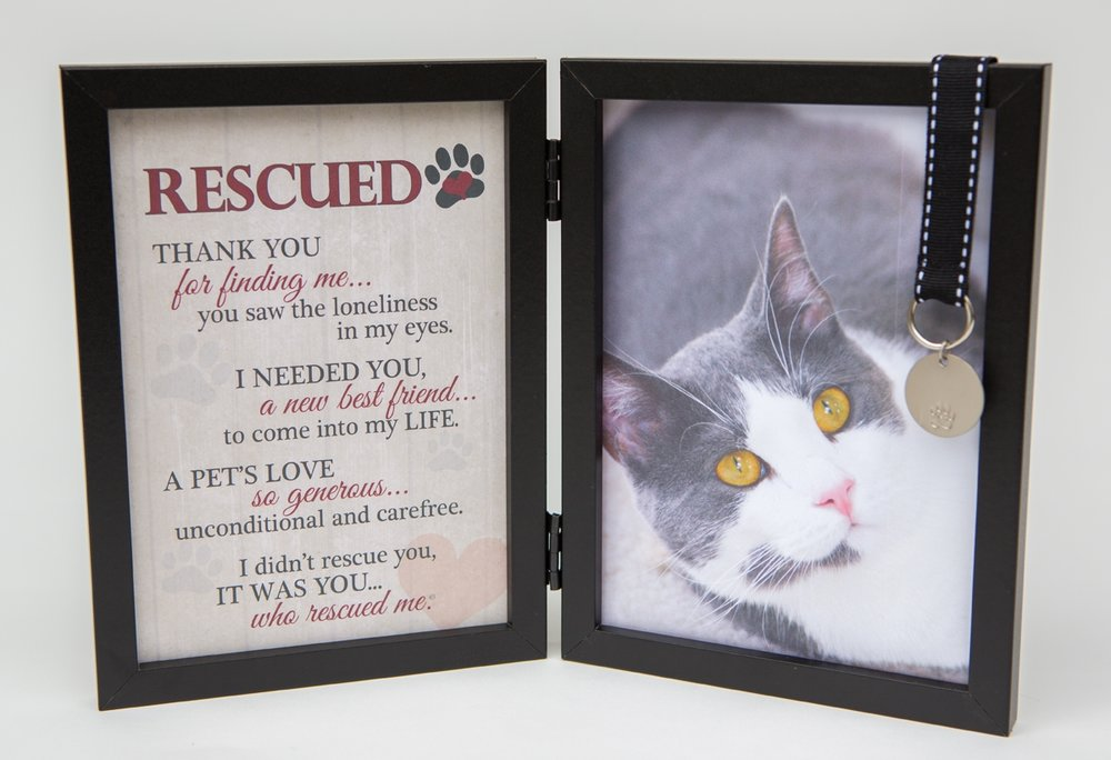 Rescued Double Desk Frame - Cat